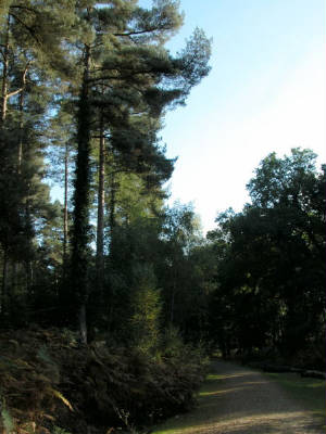 appleslade-inclosure.jpg