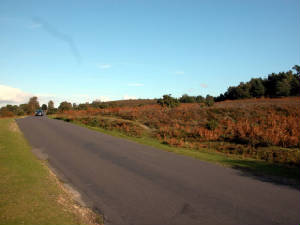 Rockford Common, New Forest
